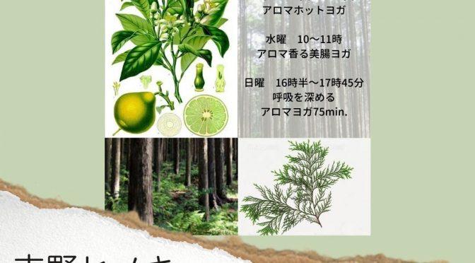 11月アロマヨガの香りをご紹介☆
